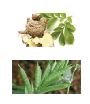 XS Natural Appetite Suppressant - hinta - myynti - apteekki - finland - tilaus